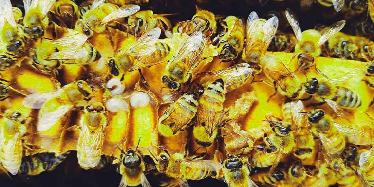 Learn What Bee Products Can Help With